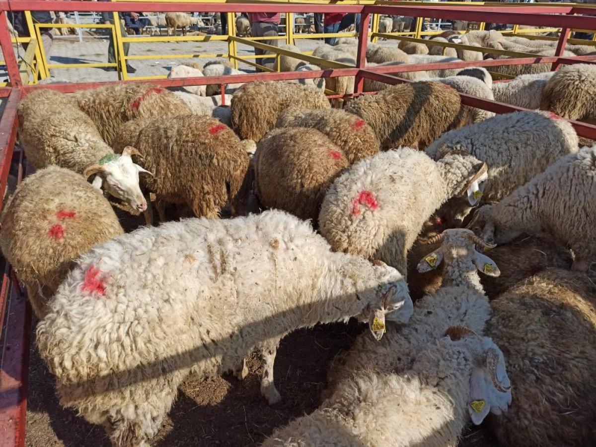 Kahramankazan'da canlı hayvan pazarı #1