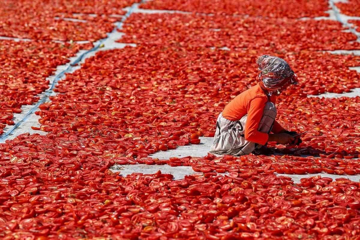 Kuru domates ihracatında hedef 100 milyon dolar  #1
