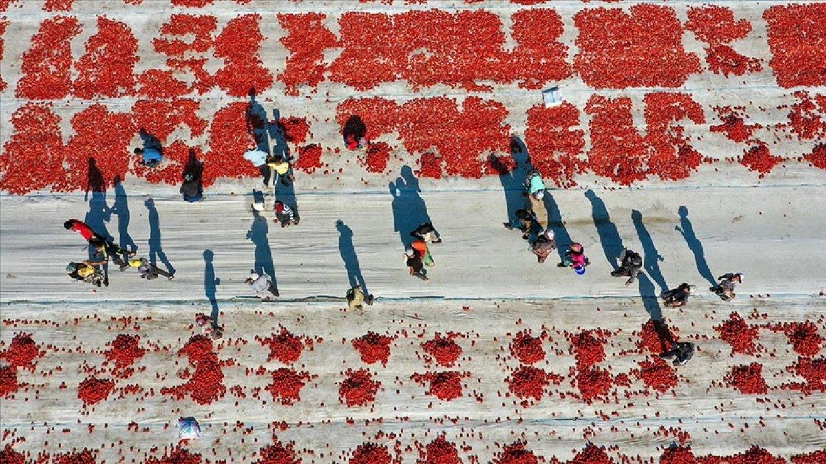 Kuru domates ihracatında hedef 100 milyon dolar  #2