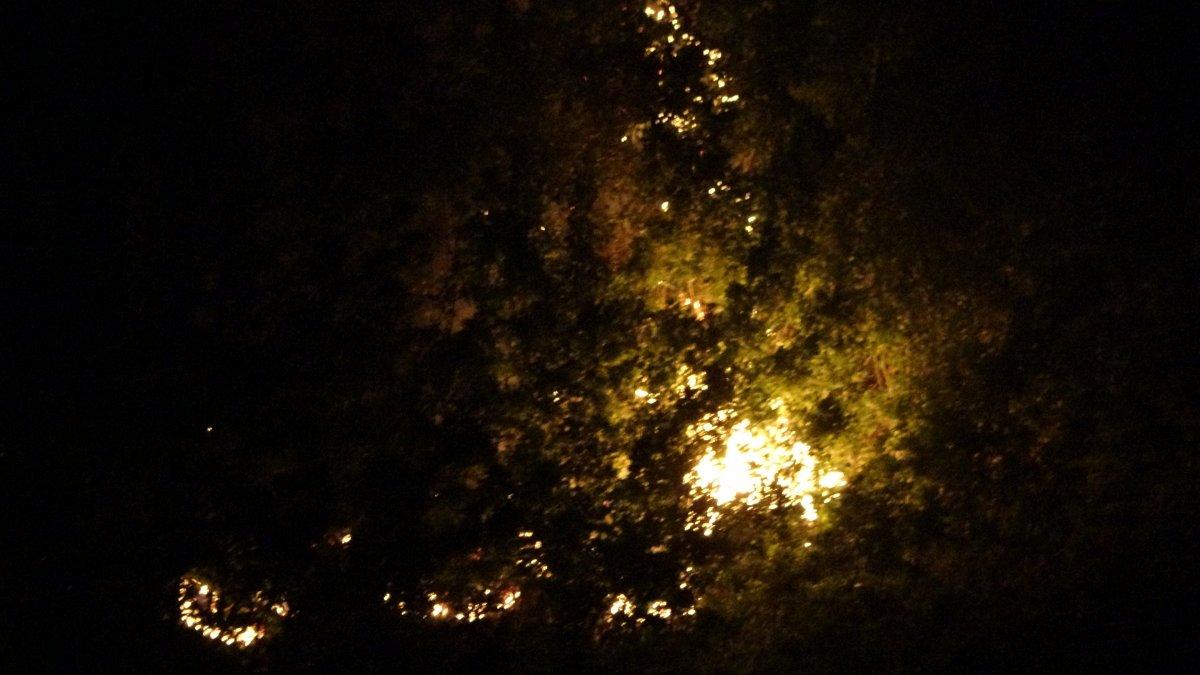 Muş ta yangın çıktı #1