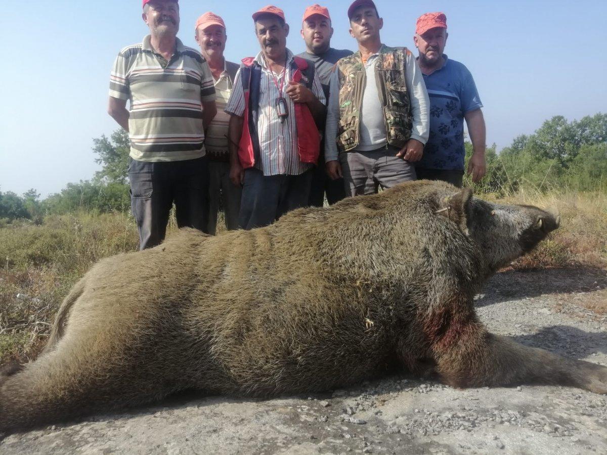 Bursa'da, tarlada 400 kiloluk domuzu vurdular #1