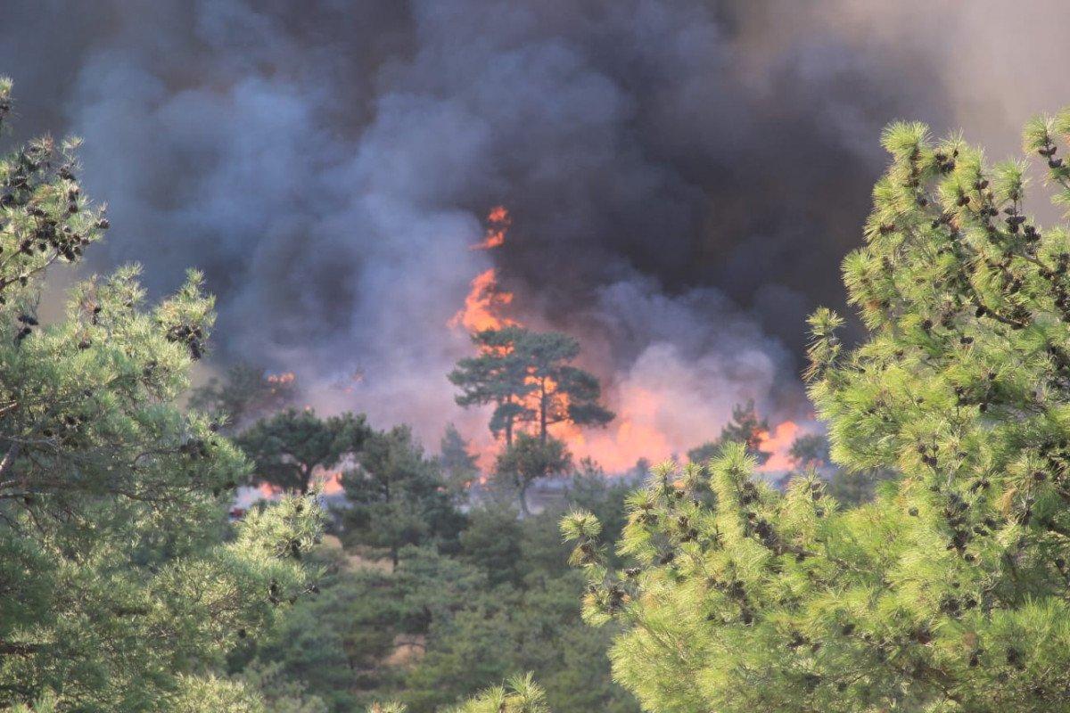 Çanakkale'de ormanlık alanda yangın çıktı  #5