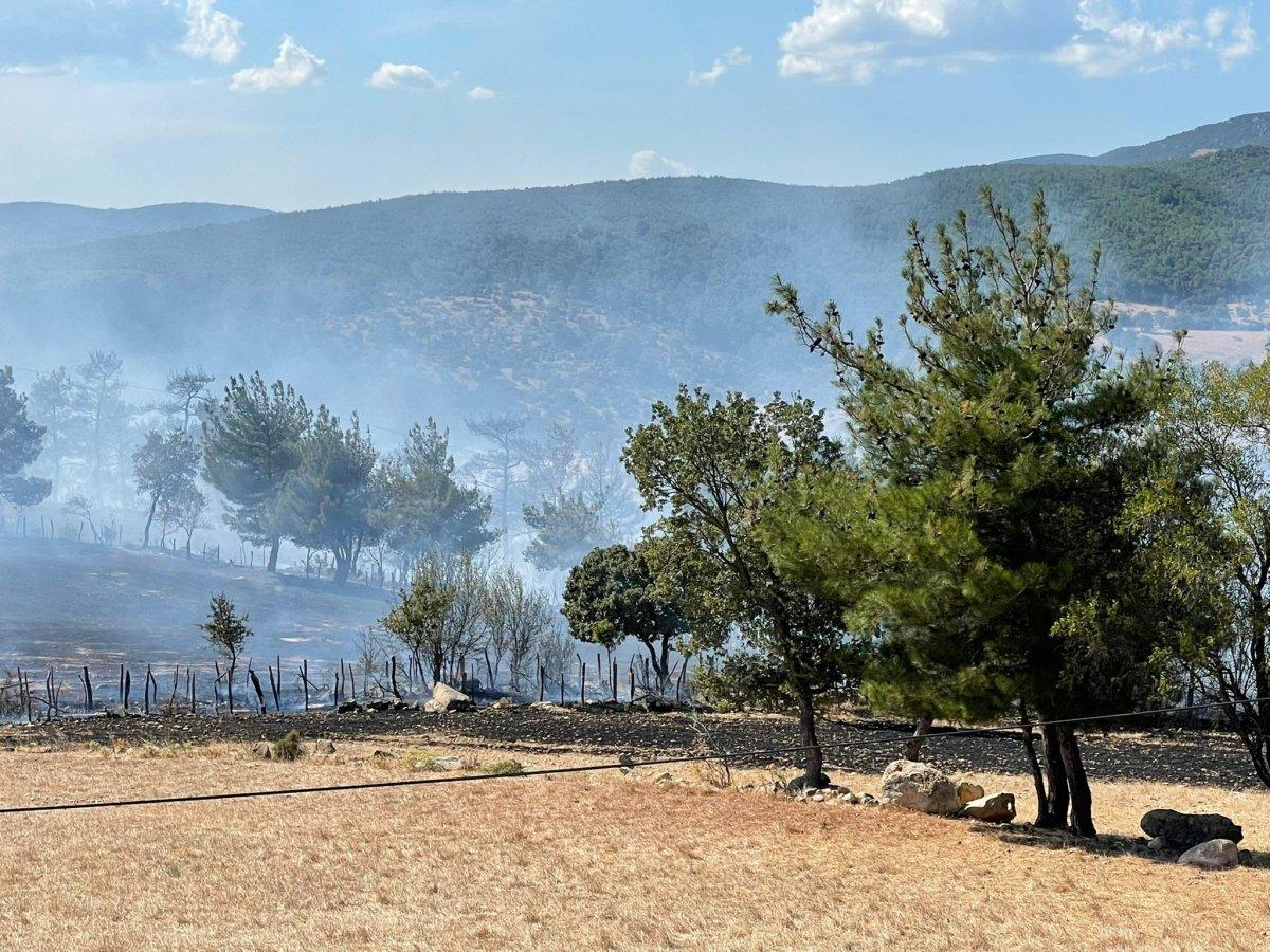 Çanakkale'de ormanlık alanda yangın çıktı  #9