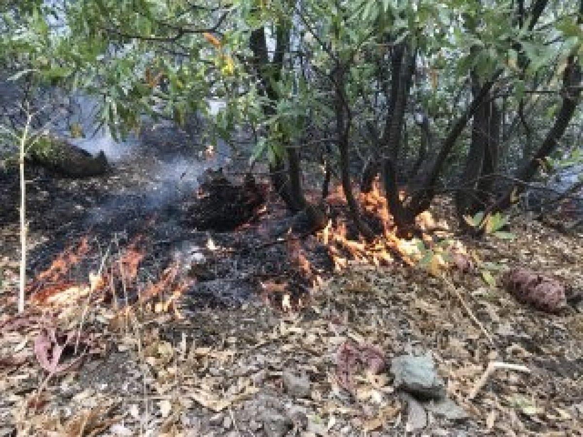 Şemdinli'de orman yangını kontrol altına alındı #6