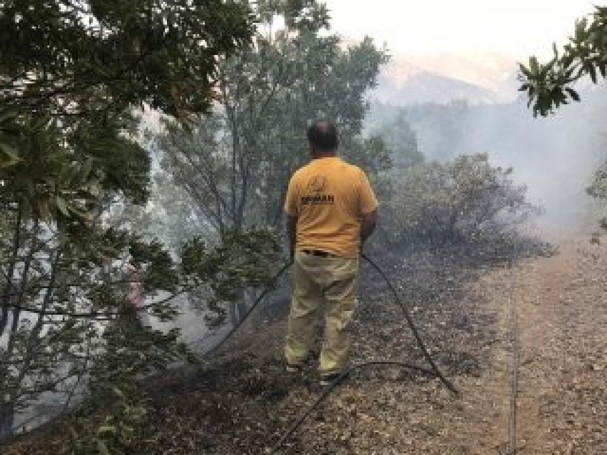 Şemdinli'de orman yangını kontrol altına alındı #4