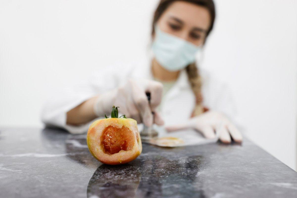 Domates üretimini olumsuz etkileyen virüse karşı yerli tohum geliştirildi #5