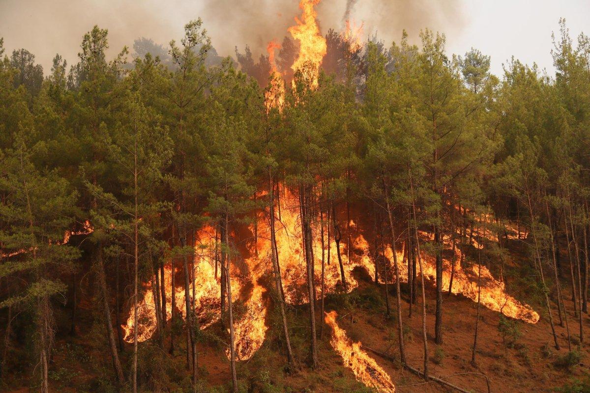 Antalya da yangınların önüne geçmek için ormanlara giriş yasağı uzatıldı #2