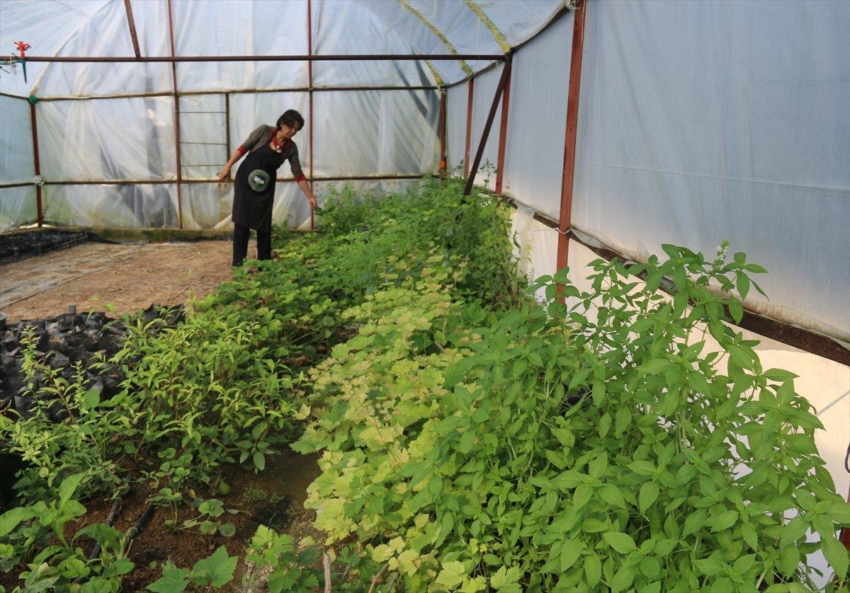 Aksaray da mor çilek yetiştiren vatandaş taleplere yetişmekte zorlanıyor #4