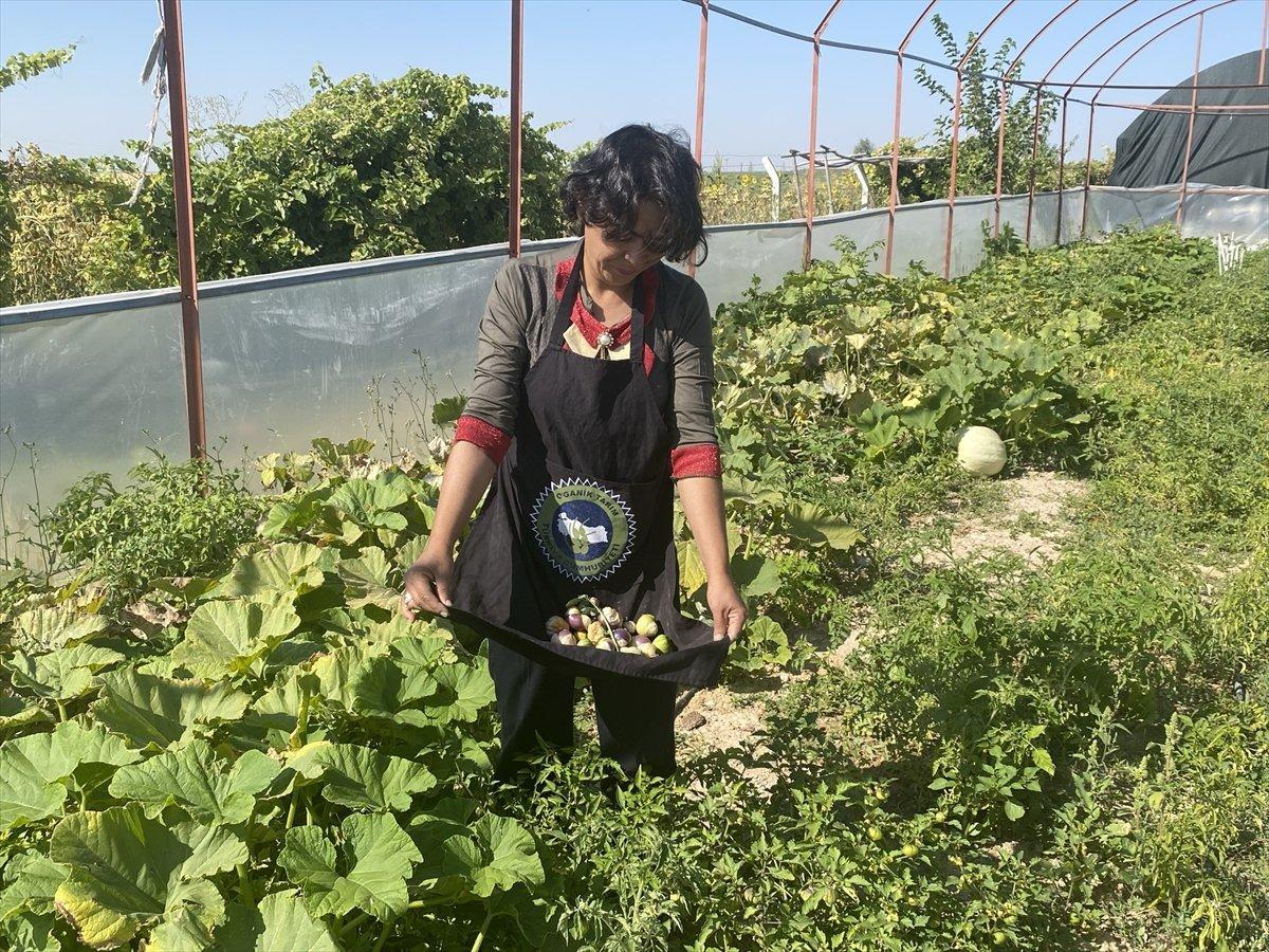 Aksaray da mor çilek yetiştiren vatandaş taleplere yetişmekte zorlanıyor #1