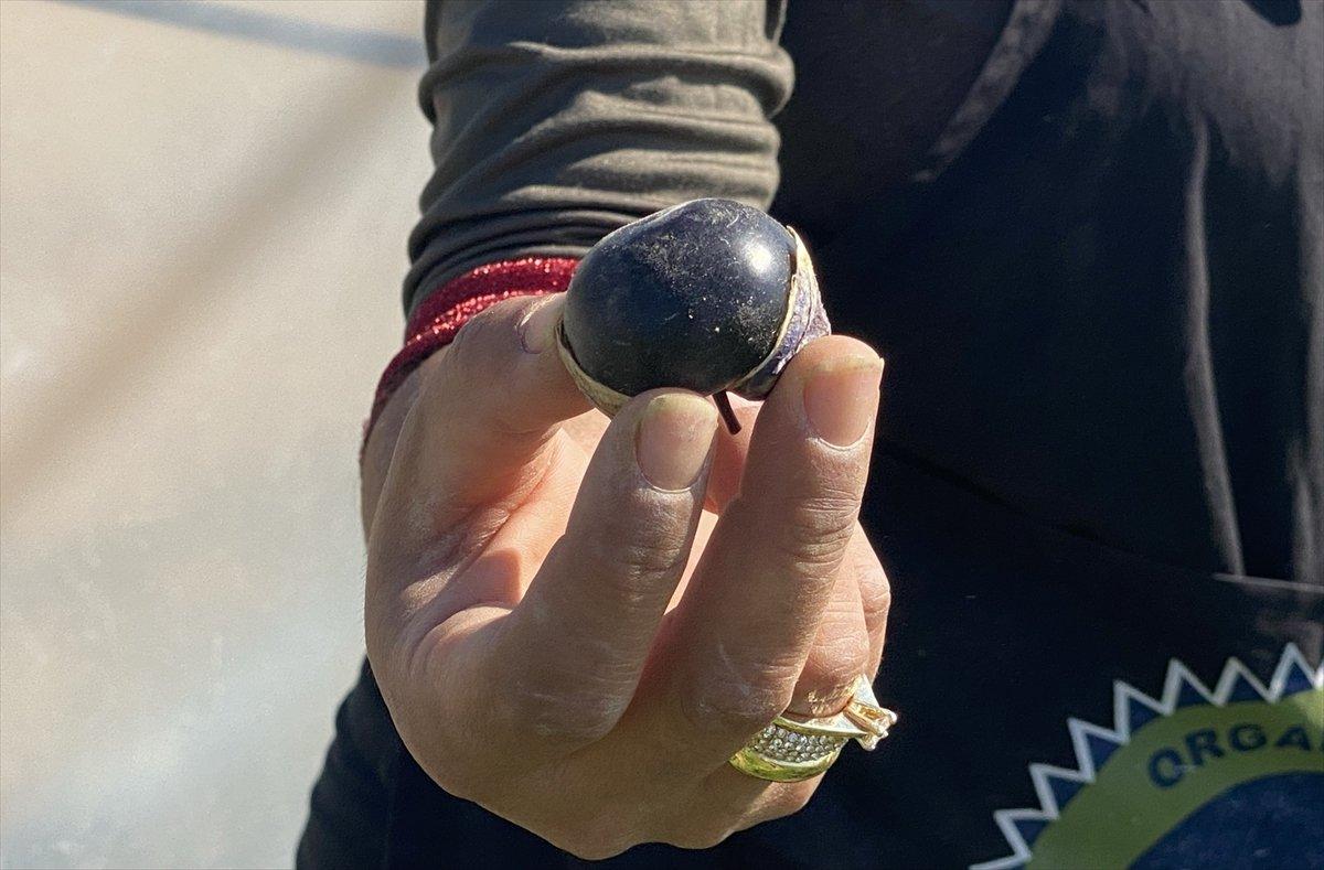 Aksaray da mor çilek yetiştiren vatandaş taleplere yetişmekte zorlanıyor #2