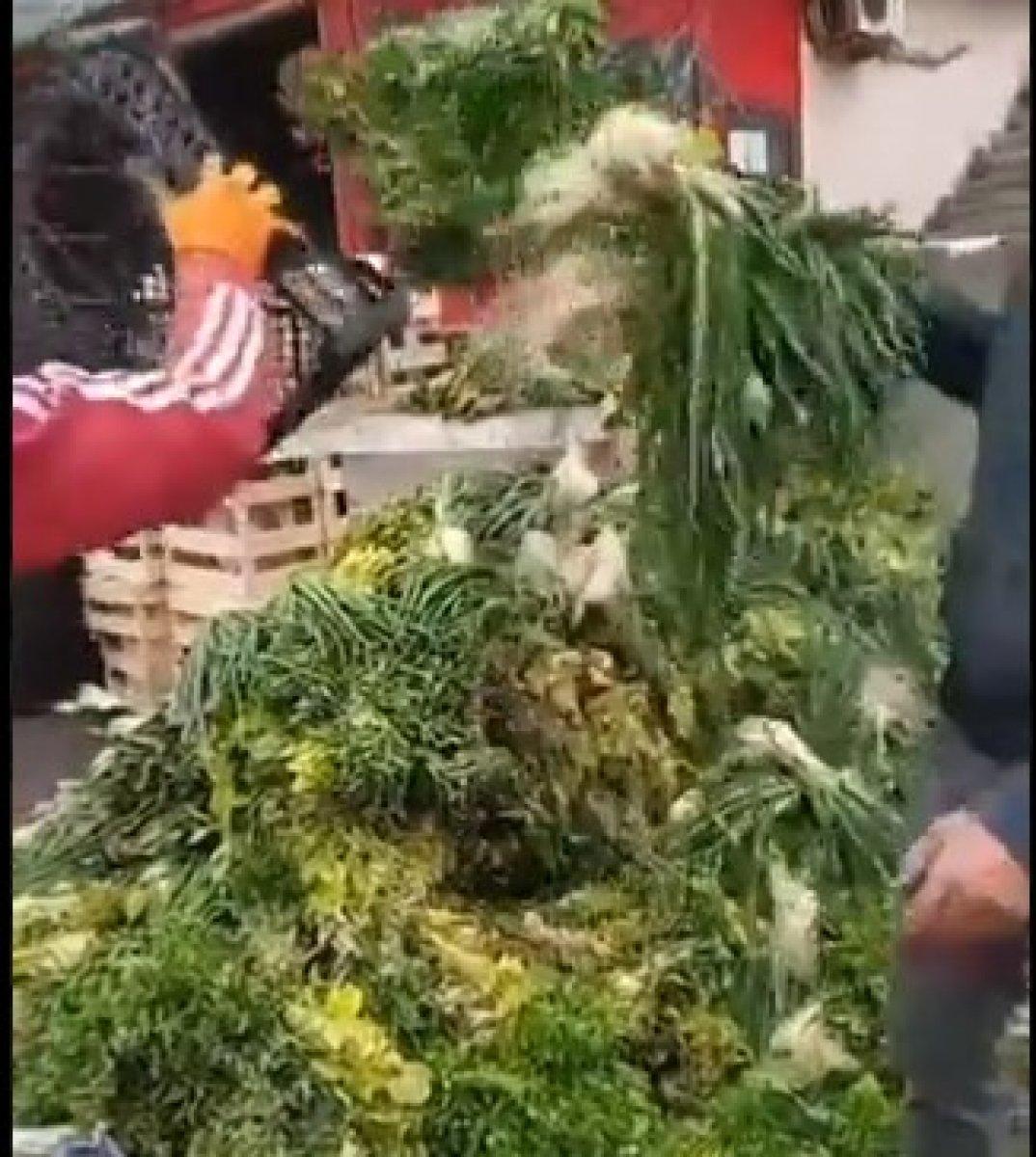 Sebze halindeki taze soğan ve kıvırcıkların çöpe atıldığı görüldü #2