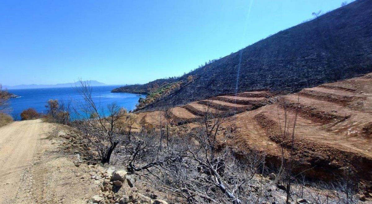 Milas'ta yanan ormanlık alanlara  inşaat yapılıyor  iddiası yalan çıktı #4