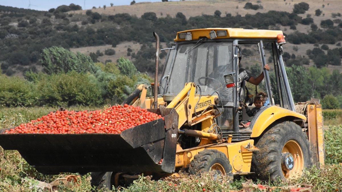 Bursa da bu yıl salçalık domateste verim çok yüksek #1