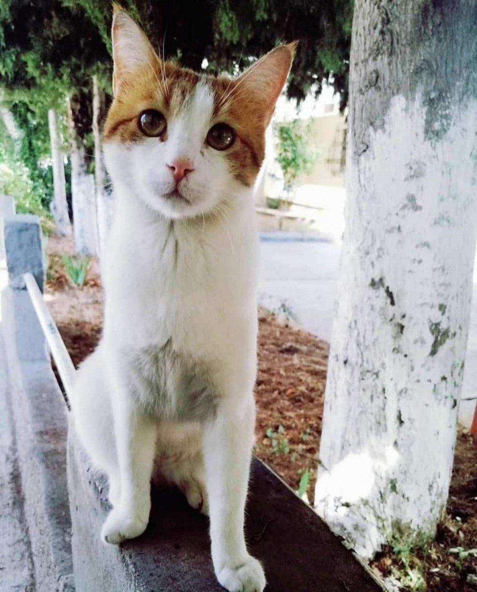 Antalya'da sokak köpekleri kediyi parçaladı #3