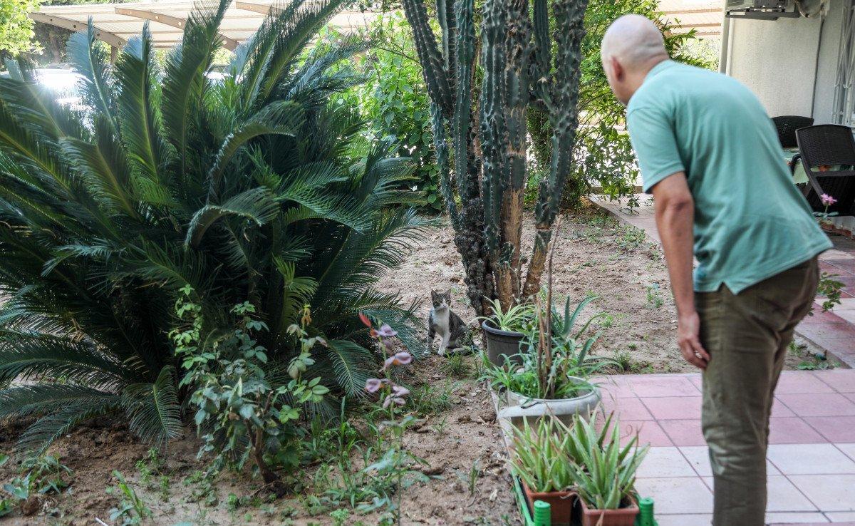 Antalya'da sokak köpekleri kediyi parçaladı #1