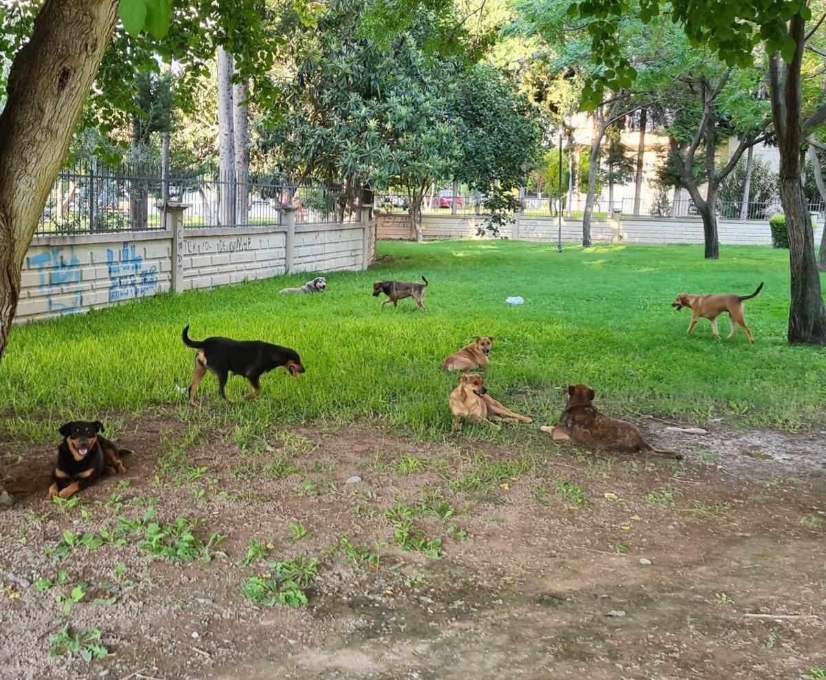 Antalya'da sokak köpekleri kediyi parçaladı #6