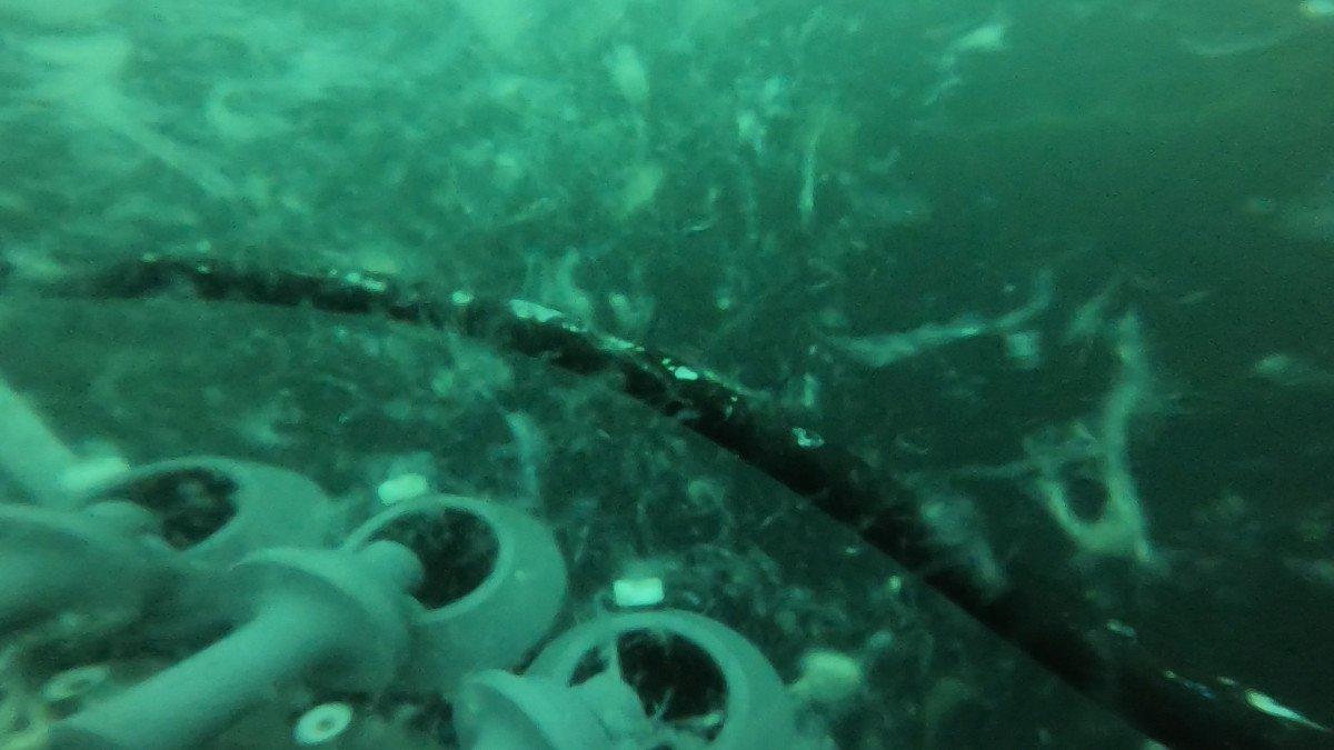 Araştırma gemisi Marmara yı karış karış inceliyor #9