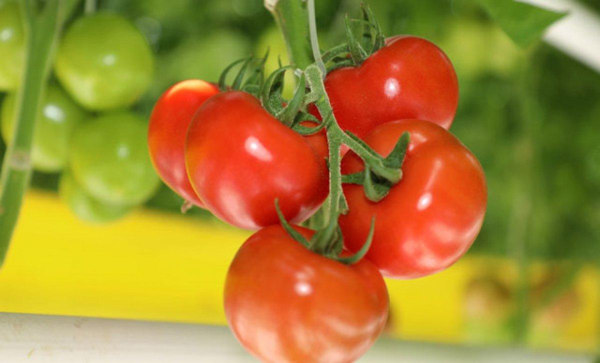 Her gün domates yemenin 6 faydası #2