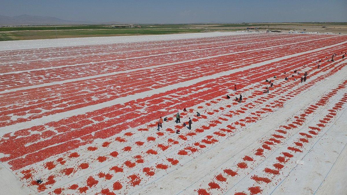 Konya nın kurutulmuş domatesleri İtalya da makarna sosu oluyor #1