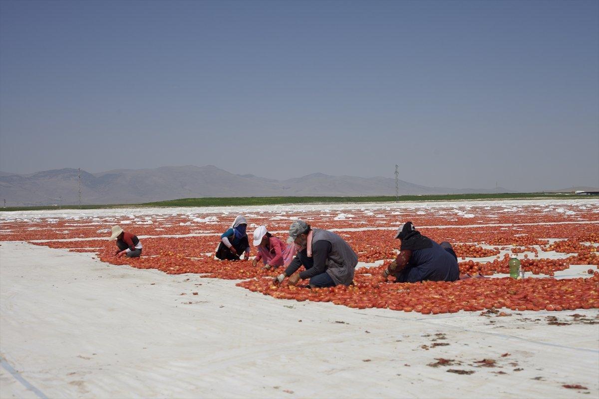 Konya nın kurutulmuş domatesleri İtalya da makarna sosu oluyor #7