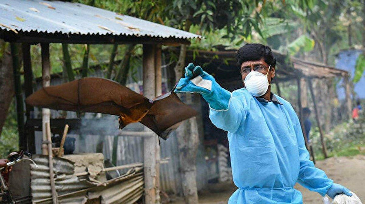 Koronavirüsten 75 kat daha ölümcül: Nipah virüsü nedir, belirtileri nelerdir? #4