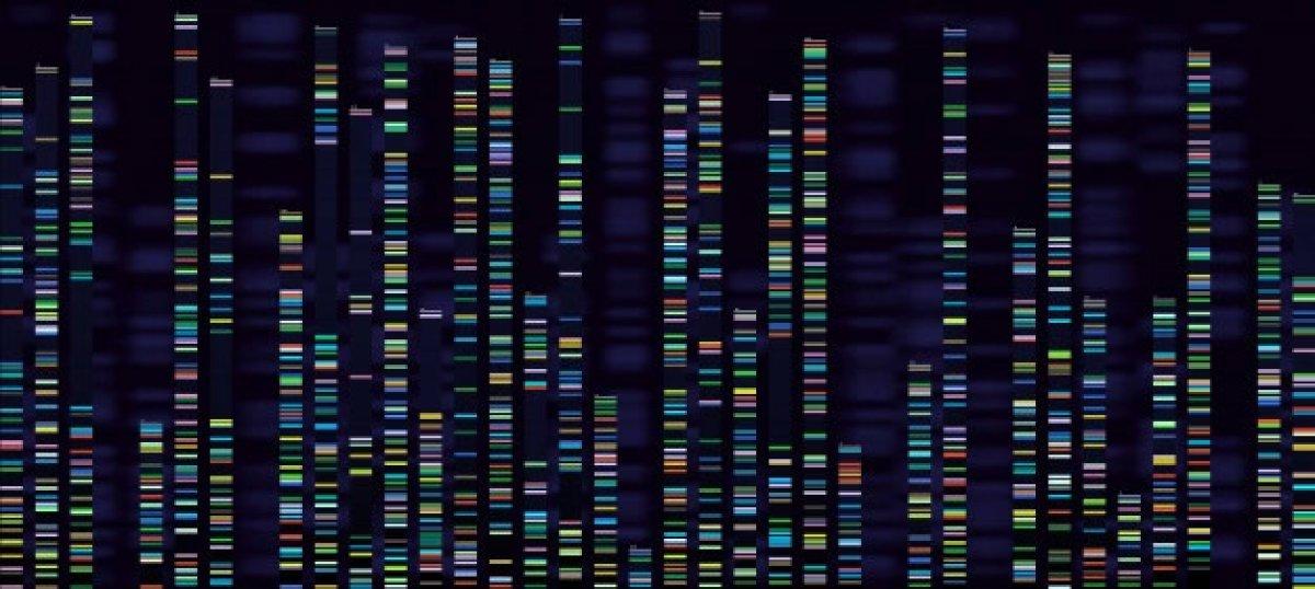 Türk toplumunun genetik yapısı analiz edildi #1
