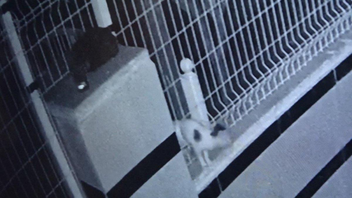 Antalya da bahçe teline sıkışan yavru kedi, 9 saat sonra kurtarıldı #1