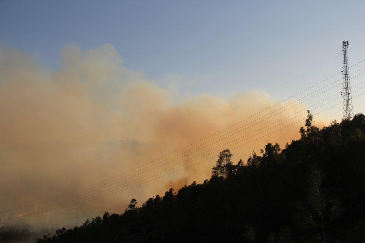 İzmir de ormanlık alanda çıkan yangın kontrol altında #2