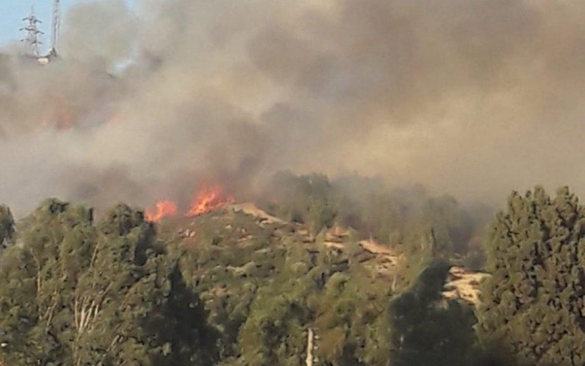 İzmir de ormanlık alanda çıkan yangın kontrol altında #3