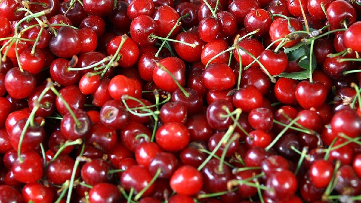 Türkiye nin 2021 meyve sebze ihracatının şampiyonu kiraz ve domates #1