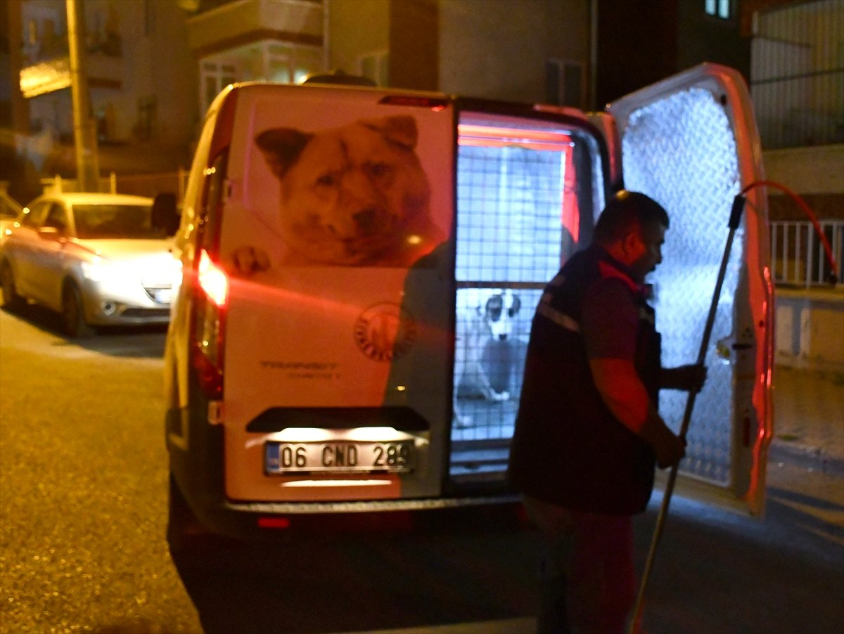 Sivas ta sahipli köpek, polise ve bekçiye saldırdı #2