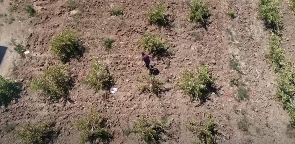 Bingöl de terör nedeniyle atıl kalan arazilerde şimdi üzüm üretiliyor #3