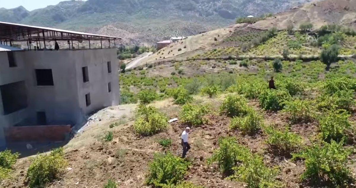 Bingöl de terör nedeniyle atıl kalan arazilerde şimdi üzüm üretiliyor #5