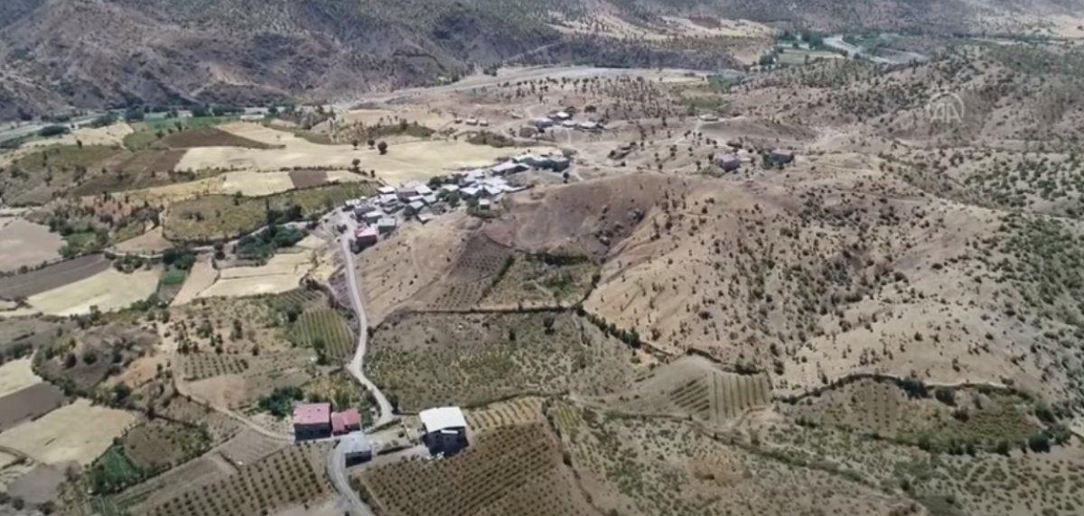 Bingöl de terör nedeniyle atıl kalan arazilerde şimdi üzüm üretiliyor #2