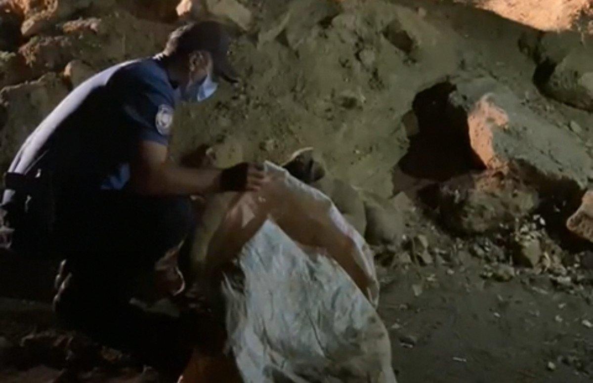 Tunceli de 6 yavru köpeği torbaya koyup, nehir kenarına attılar #1