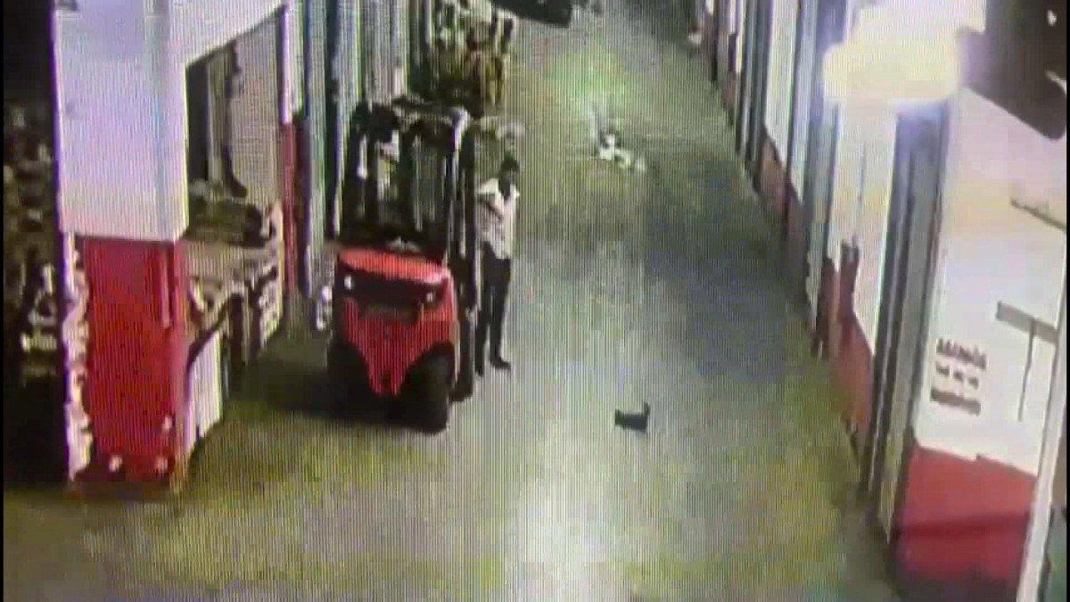İstanbul da yavru kediyi tekmeleyerek öldüren cani kamerada #3
