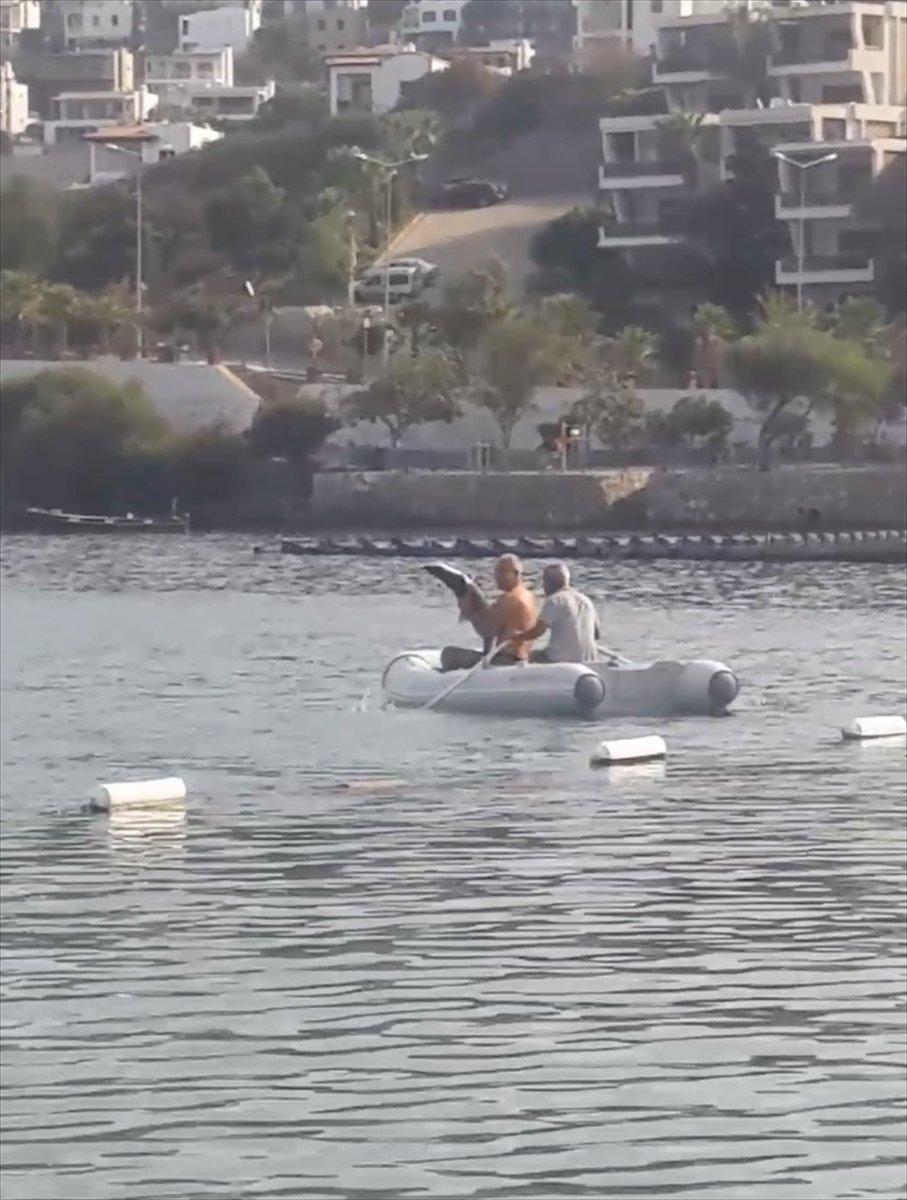 Muğla'da görülen camgöz köpek balığı, güvenli alana bırakıldı  #2