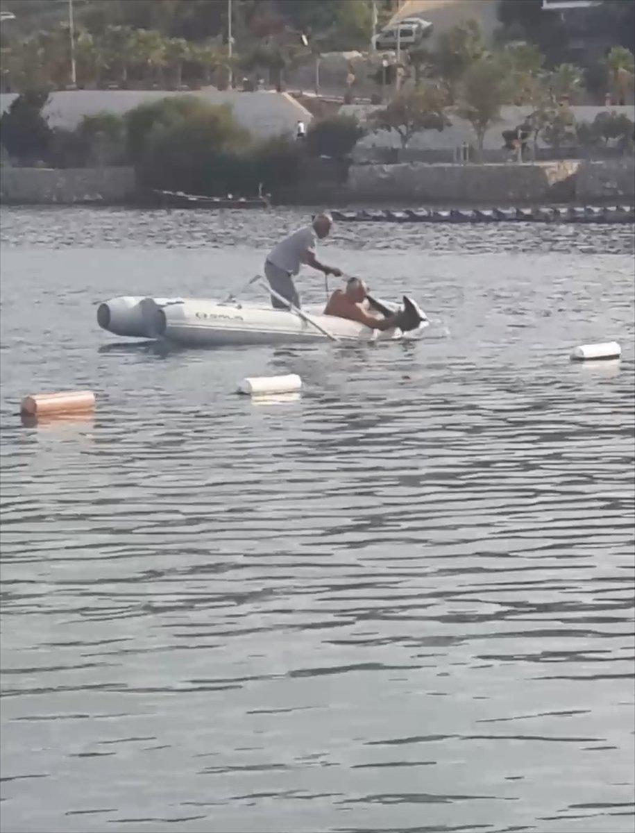 Muğla'da görülen camgöz köpek balığı, güvenli alana bırakıldı  #3