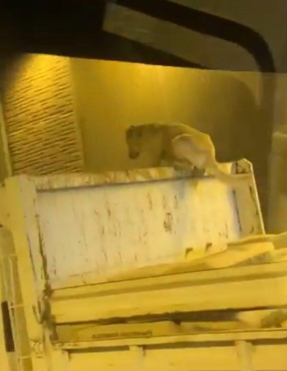 Kocaeli de bir köpek, kamyonun üzerinde seyahat ederken görüntülendi #2