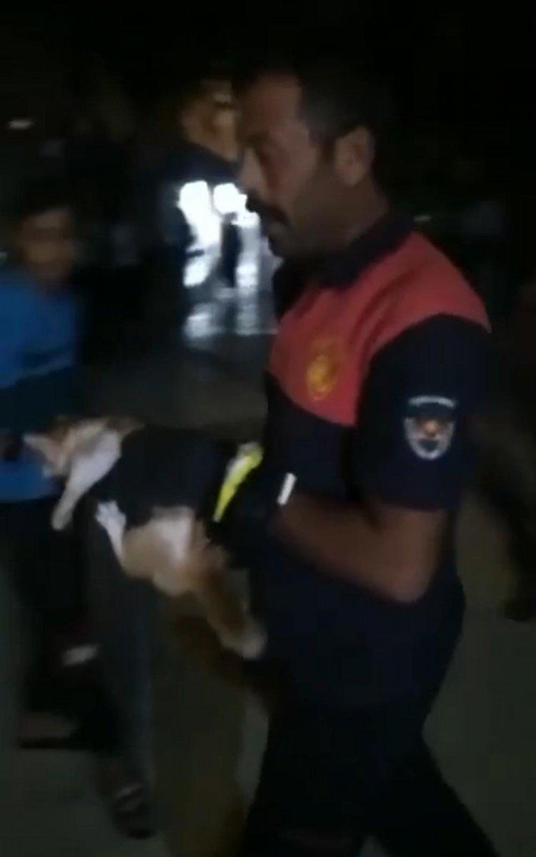 Şanlıurfa da mahsur kalan kediyi itfaiye ekipleri kurtardı #1