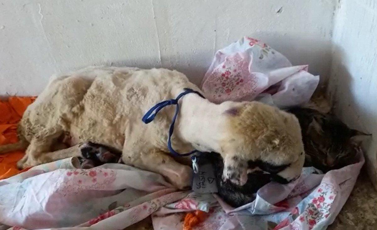 Antalya da yangından kurtarılan hayvanların tedavisi devam ediyor #4