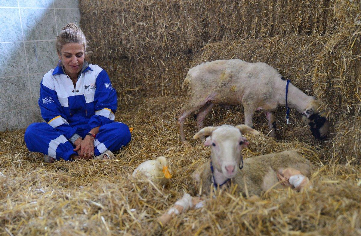 Antalya da yangından kurtarılan hayvanların tedavisi devam ediyor #6
