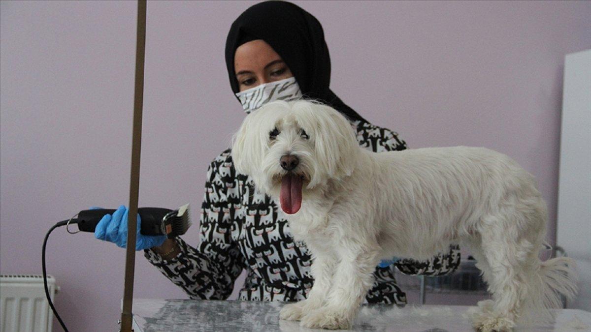 Kayseri de devlet desteğiyle açtığı kuaför salonunda evcil hayvanları güzelleştiriyor #2