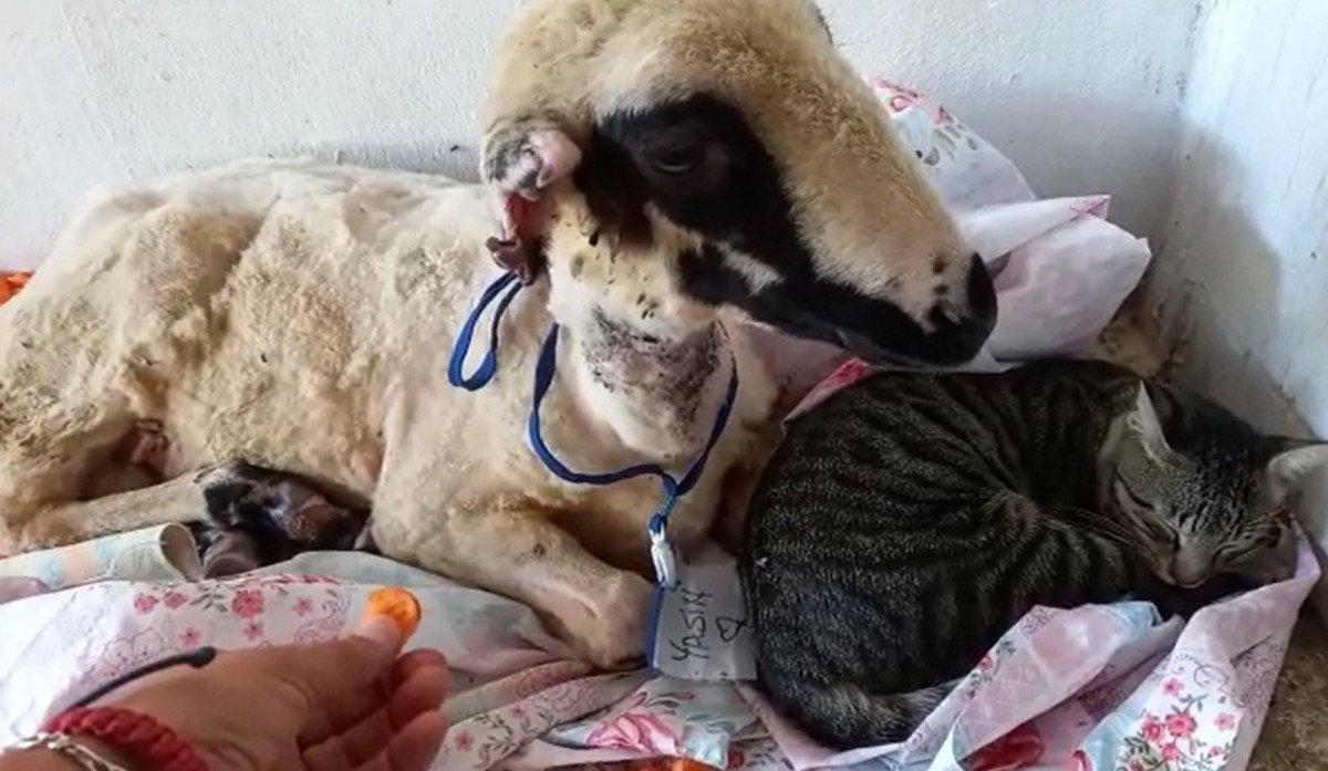 Antalya da yangından kurtarılan hayvanların tedavisi devam ediyor #5