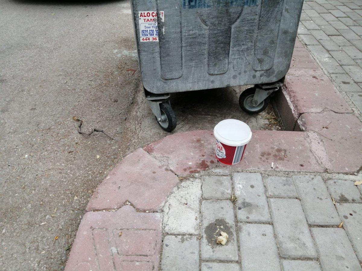 Ankara da mahallelinin hayvanlara bıraktığı mamalar tekmelendi #1