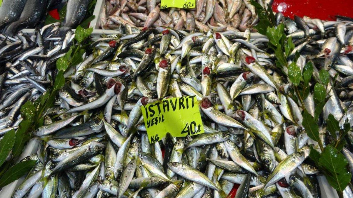 Çanakkale'de balık tezgahlarında fiyatlar düşüşe geçti  #5
