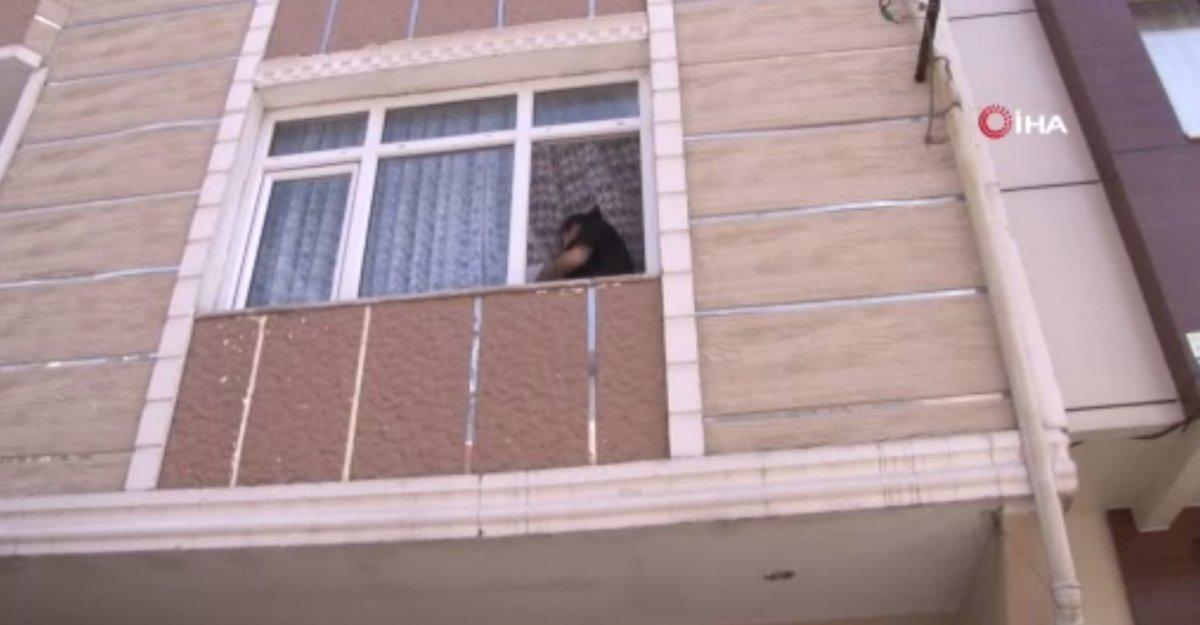 Küçükçekmece de hırsızlar önce kapıyı çaldı, ardından içeri girip evi soydu #2