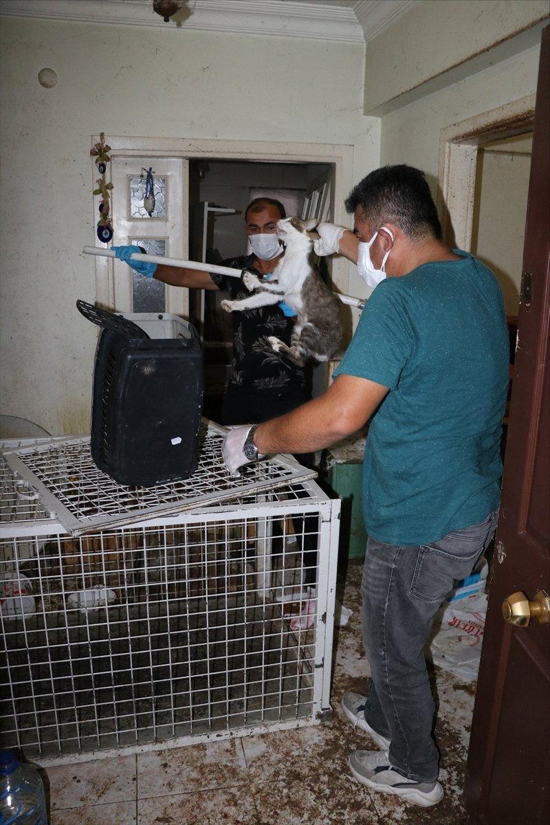 Bolu'da yaşlı kadının koku yayan evinden 50 kedi çıktı  #8