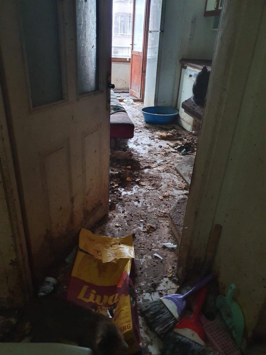 Bolu'da yaşlı kadının koku yayan evinden 50 kedi çıktı  #5