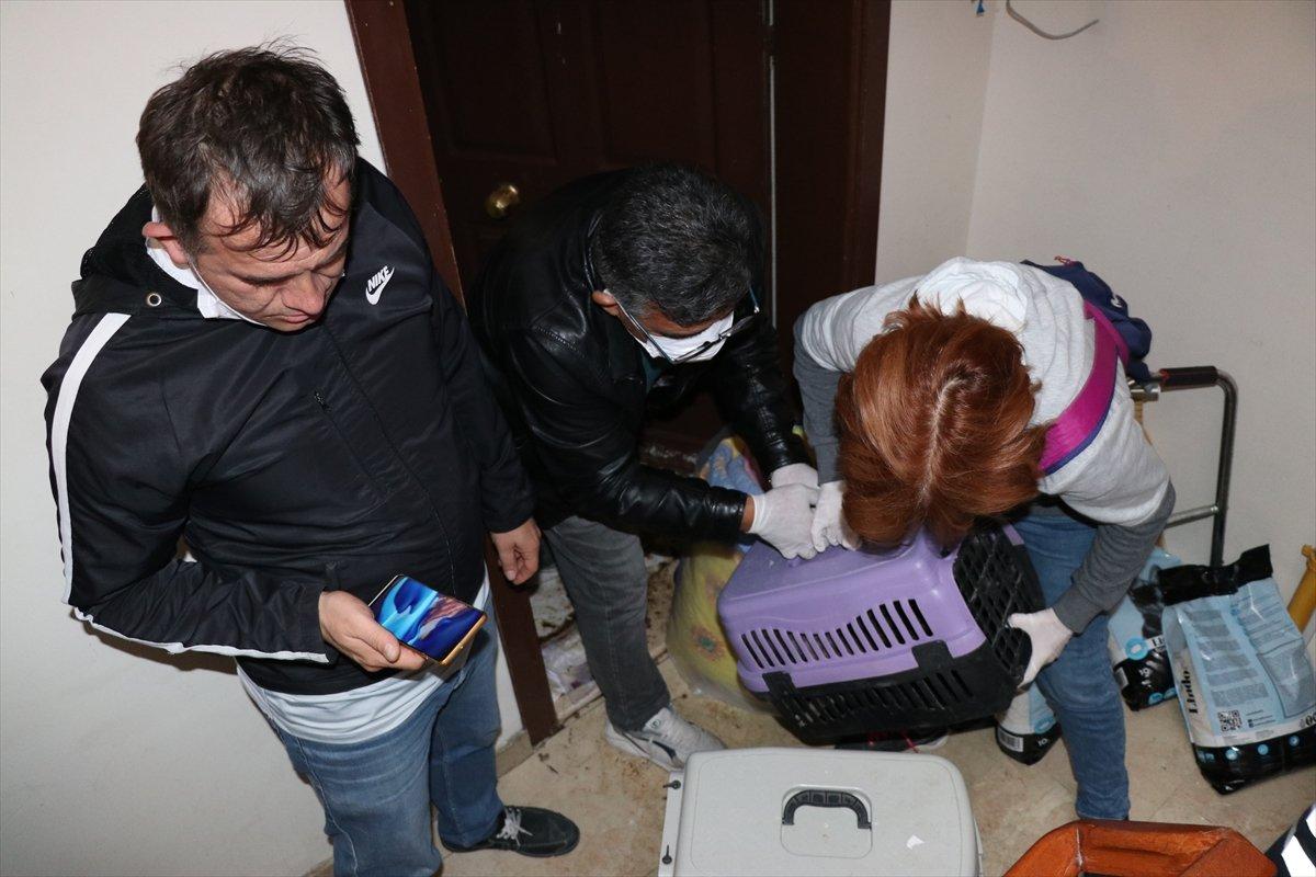 Bolu'da yaşlı kadının koku yayan evinden 50 kedi çıktı  #12